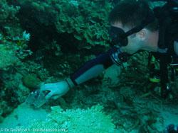 BD-060412-Moalboal-4121090-Homo-sapiens.-Linnaeus.-1758-[Diver].jpg